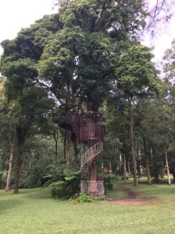 Strat of the treetop walk
