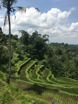 Incredible rice terraces at Jatiluwih